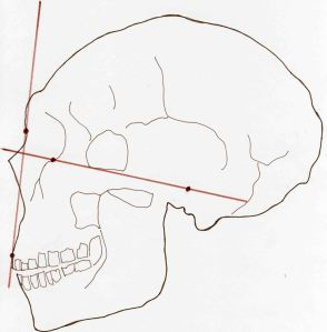 Atala Neanderthal La Ferrassie facial angle