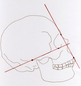 Atala modern european facial angle