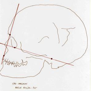 Atala Cro Magnon Facial angle