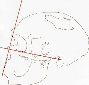 Atala Neanderthal La Chapelle aux Saints facial angle