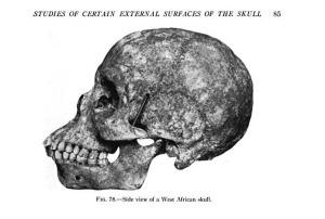 Atala African skull Bushman