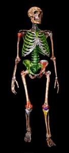 Atala Neanderthal Frankenstein