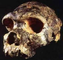 Atala Archaic Homo Sapiens skull Bodo