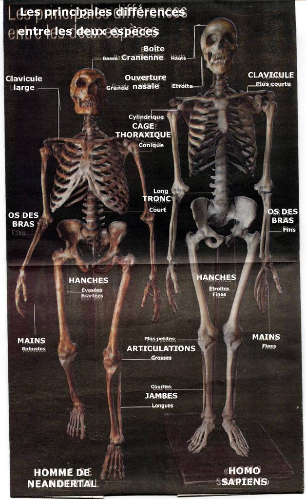 neanderthal cro magnon comparison essay