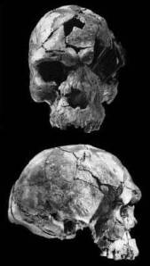 Atala archaic homo sapiens skull herto 2
