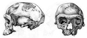 Atala Archaic Homo Sapiens skull Jebel Irhoud