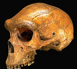 Atala Archaic Homo Sapiens skull Kabwe