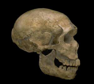 Atala Neanderthal skull from La Ferrassie