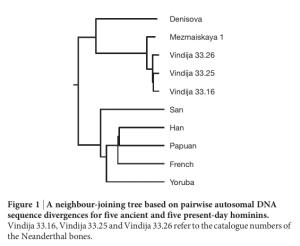 Atala neanderthal vindija mezmaizkaya