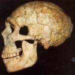 Atala Neanderthal Crane Profil