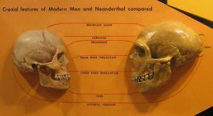 Atala Neanderthal Cro Magnon skull comparison