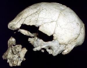 Atala archaic homo sapiens skull ngaloba lh18