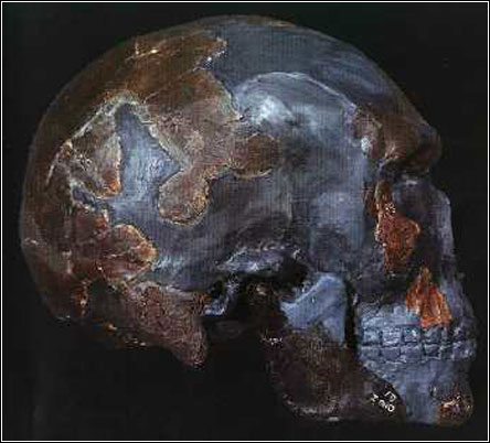dating sapiens The oldest fossil remains of homo sapiens, dating back to 300,000 years, have been found in morocco the find widens the cradle of mankind from east africa to the whole continent.