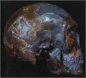 Atala archaic Homo Sapiens reconstruction OMO 1