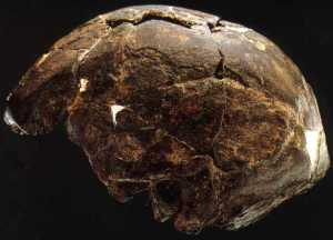 Atala archaic Homo Sapiens OMO2