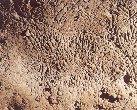 Traces of bear claws (35,000 years), Bara-Bahau, France