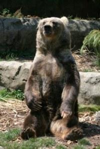 959628-ours-brun-assis-sur-les-rochers