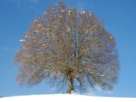 arbre2dhiver