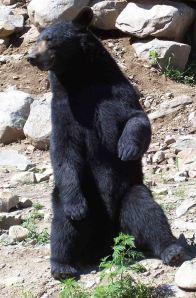 osos6