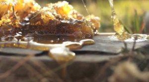 ForeBears, rayons de miel