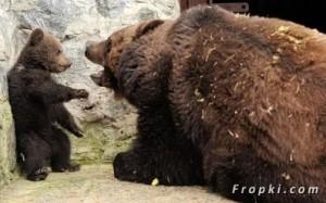 L'ours réprimande son petit