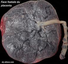 Placenta, face foe tale