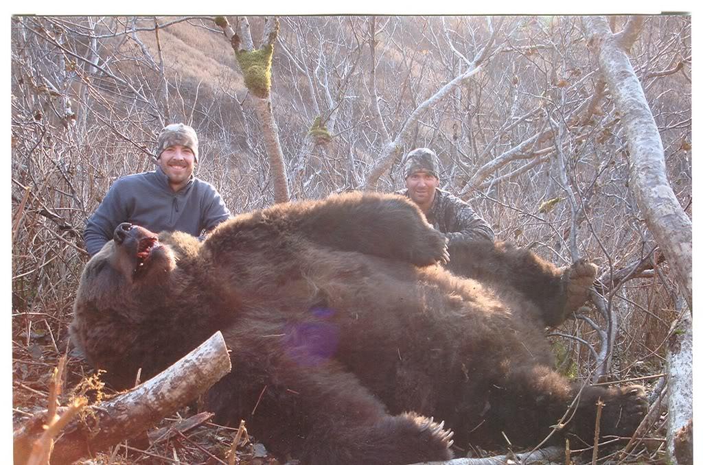 Kodiak Bear Size Compared Human B. the cult of the \x3cb\x3ebear\x3c/b ... Grizzly Bear Face Logo