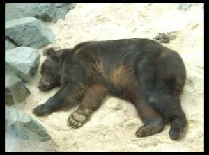 osos5